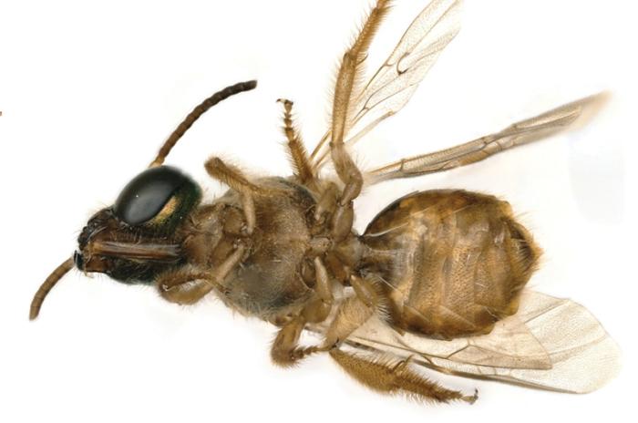 bee-legs.jpg (145.3 Kb)