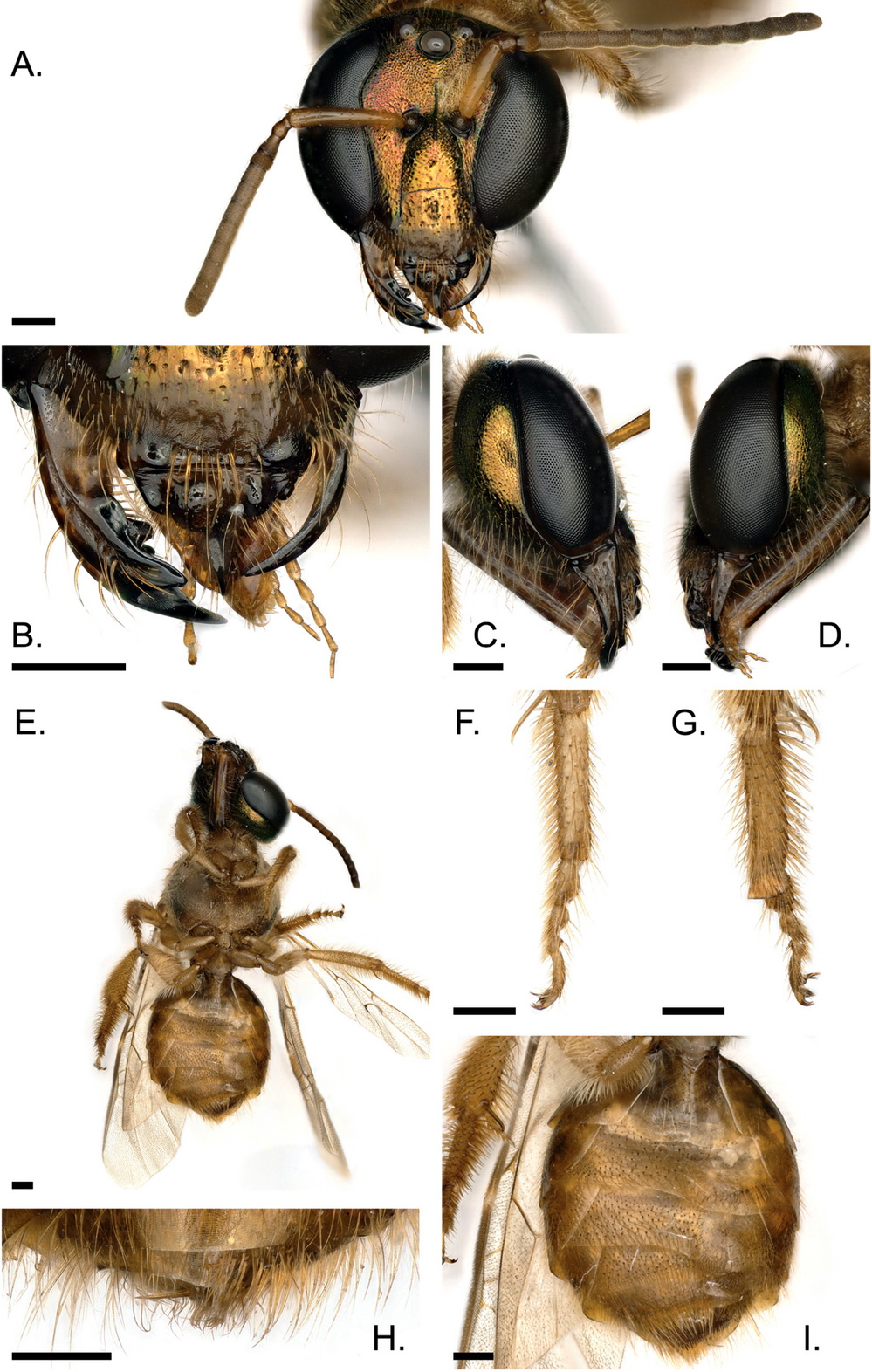 bee-legs2.jpg (464.5 Kb)