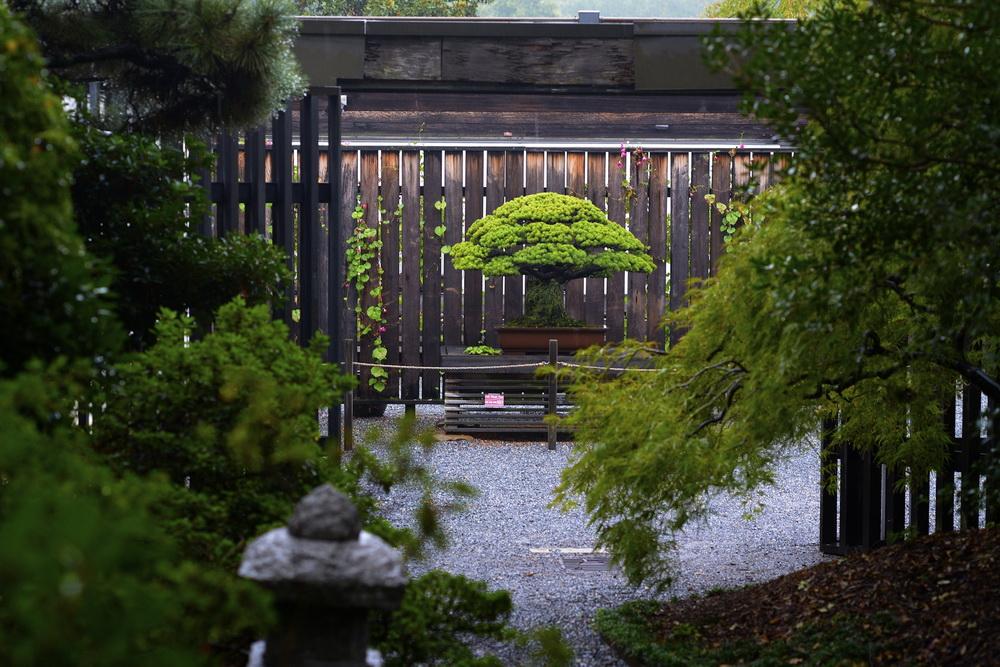 bonsai3.jpg (285.86 Kb)