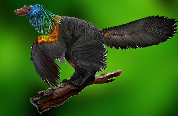 Відкрито різновид динозаврів, які мали пір'я кольорів веселки