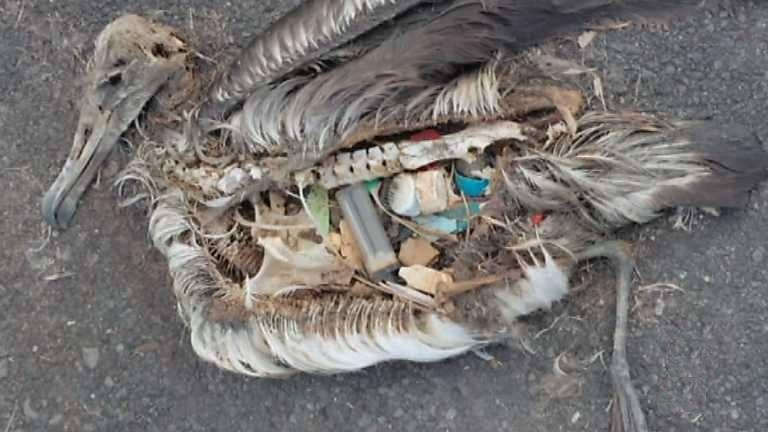garbage9.jpg (44.95 Kb)