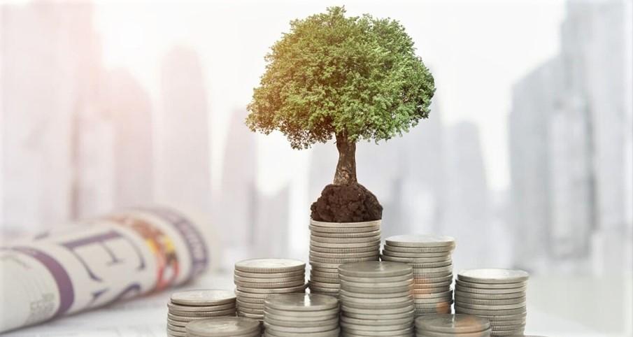 money_tree.jpg (95.16 Kb)