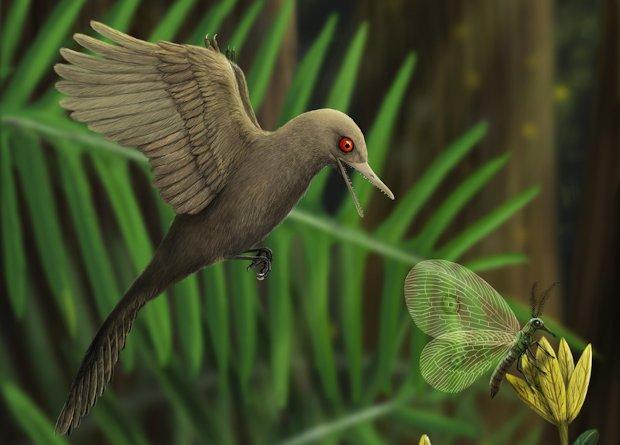 Знайдено рештки мініатюрного динозавра розміром з колібрі