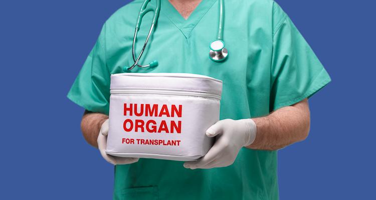 Нідерландці після смерті автоматично ставатимуть донорами органів